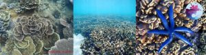 Hệ sinh thái rạn san hô tại Hòn Khô