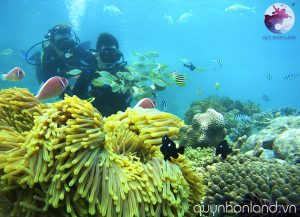 Lặn san hô ở Kỳ Co - Ảnh: Nguyễn Dũng