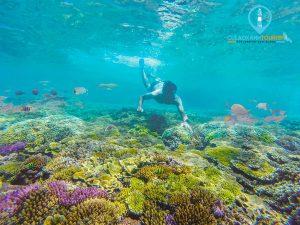 Khách du lịch lặn san hô ở Cù Lao Xanh - Cù Lao Xanh Tourism