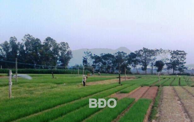 Vùng rau VietGAP Thuận Nghĩa - sản phẩm kiến tạo của người dân làng quê.