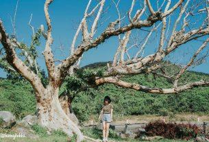 Du lịch Quy Nhơn Phú Yên điểm đến mang nhiều kỷ niệm