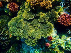 Đến với Hòn Khô, một hoạt động thú vị mà du khách không nên bỏ qua là lặn biển ngắm san hô. Ảnh: Hòn Khô. Mũi Vi Rồng - Ảnh Internet