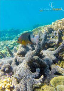 Lặn biển, ngắm san hô là một trong những trải nghiệm thu hút du khách đến với Nhơn Châu.