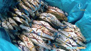 Mua hải sản trước khi qua đảo