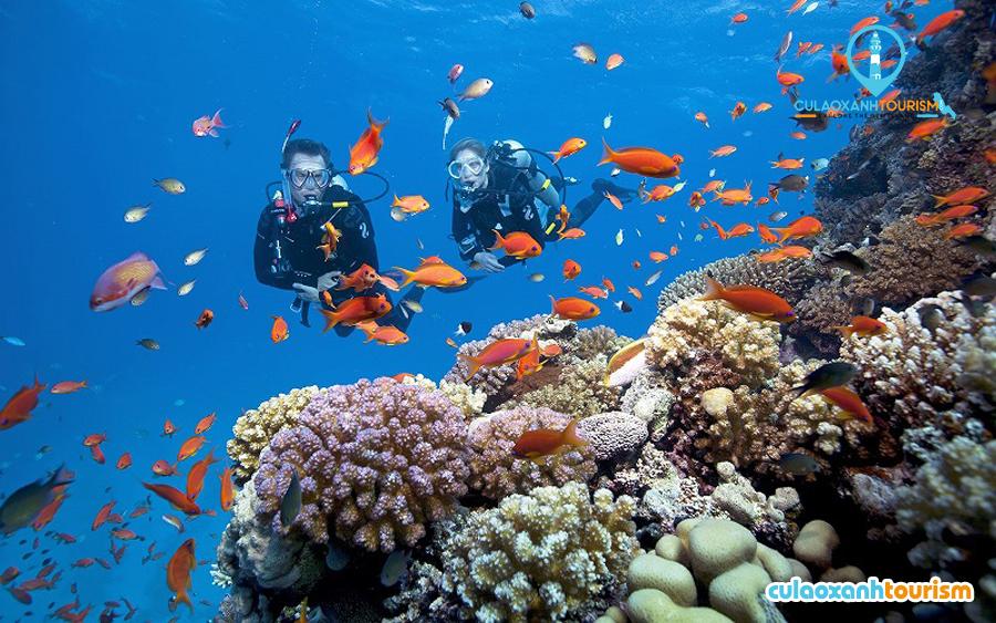 Lặn ngắm San Hô trên đảo - Ảnh Internet
