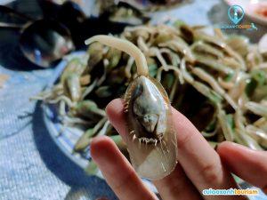 Cho ai chưa từng biết con dẽ áo, con giá biển, con gián lai con nòng nọc biển :))) Nhìn hơi ghê sợ nhưng ăn cũng ngon ha - Ảnh Internet