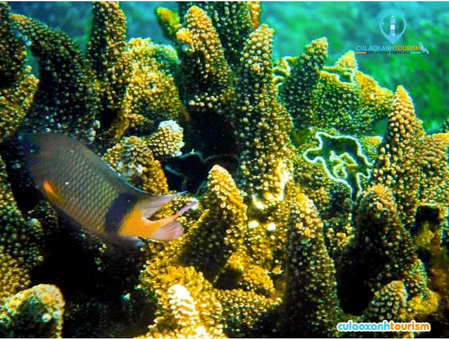 Bãi san hô tuyệt đẹp giữa lòng đại dương - Ảnh: Sưu tầm