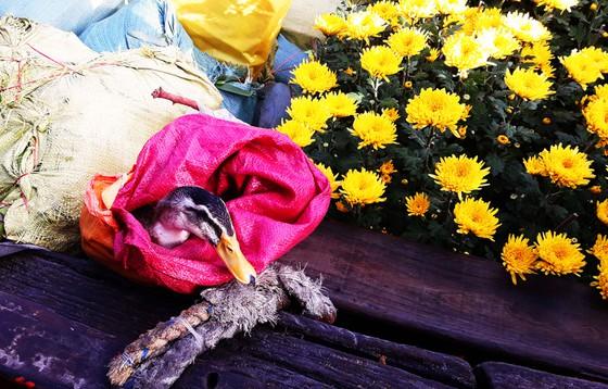 Hoa tươi và thực phẩm phục vụ cho những ngày tết của bà con ở đảo Cù Lao Xanh - Ảnh ST